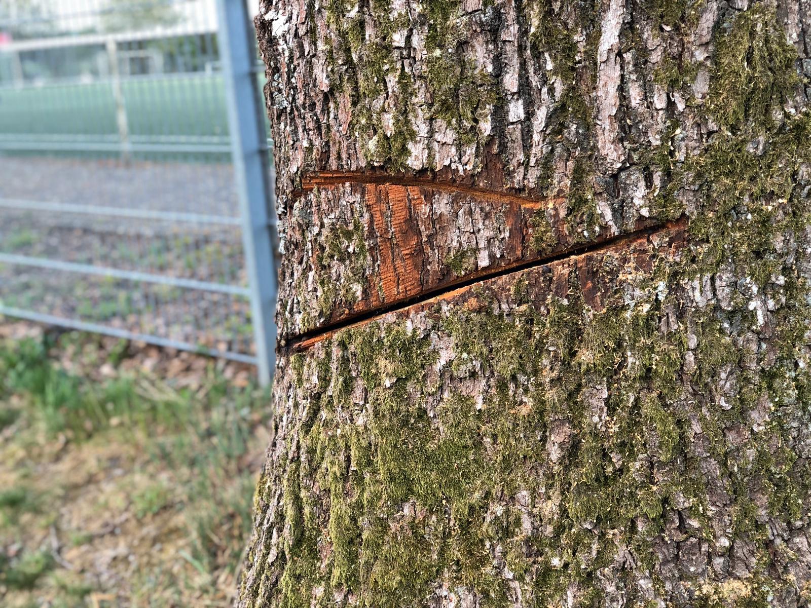 Vandalismus an der Eulenbuche